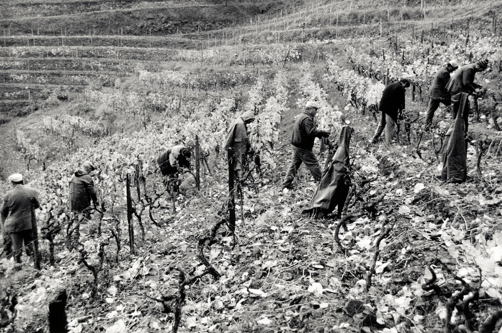 walter_rothwell_douro_port_wine_22.jpg