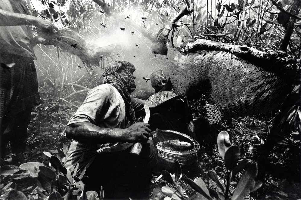 walter_rothwell-honey_hunters_12 copy.jpg