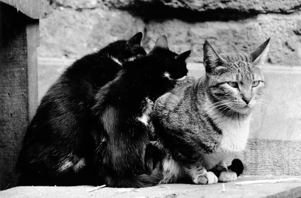 walter_rothwell_photography_cats-022.jpg