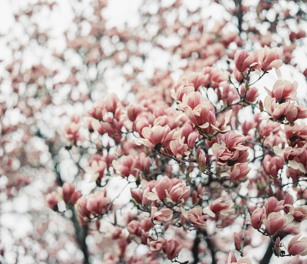 Mar _ Apr 2015_049-8.jpg