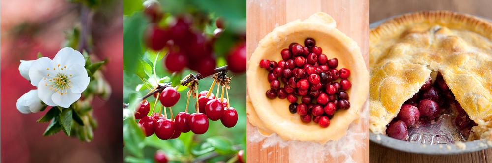life+cycle+cherry+pie+merriam+photography