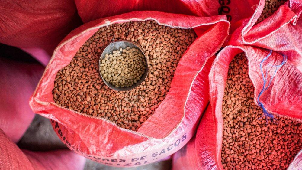 Seeds Coffee Company - Birmingham, AL