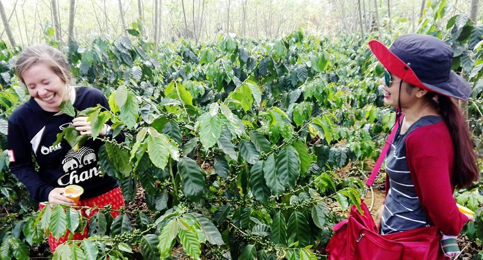 Auxano Coffee Farm - Pakse, Laos