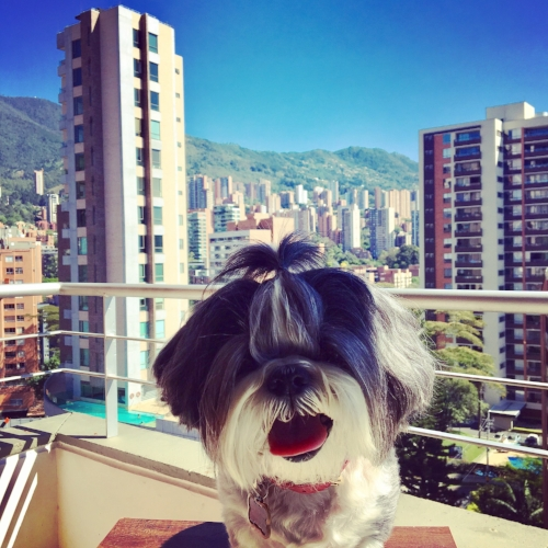 Oscar's first day in Medellin!