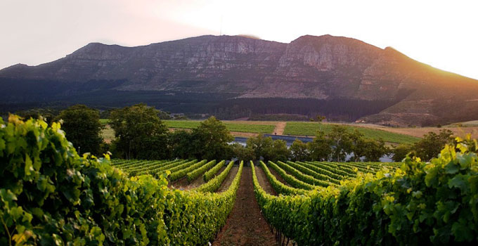 www.drinkpreneur.com-cape-winelands-10.jpg
