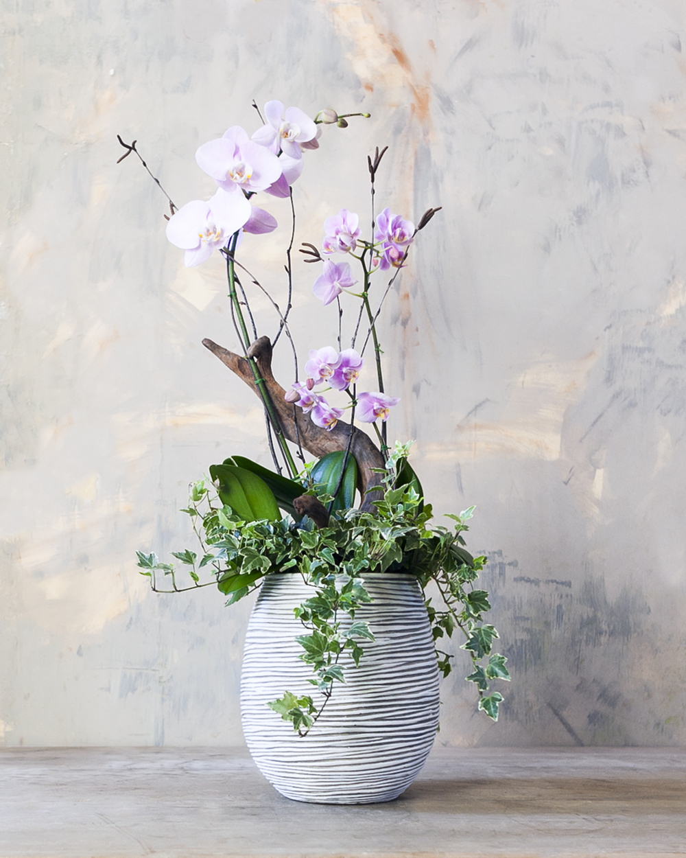 orchid_arrangement_medium_2.jpg