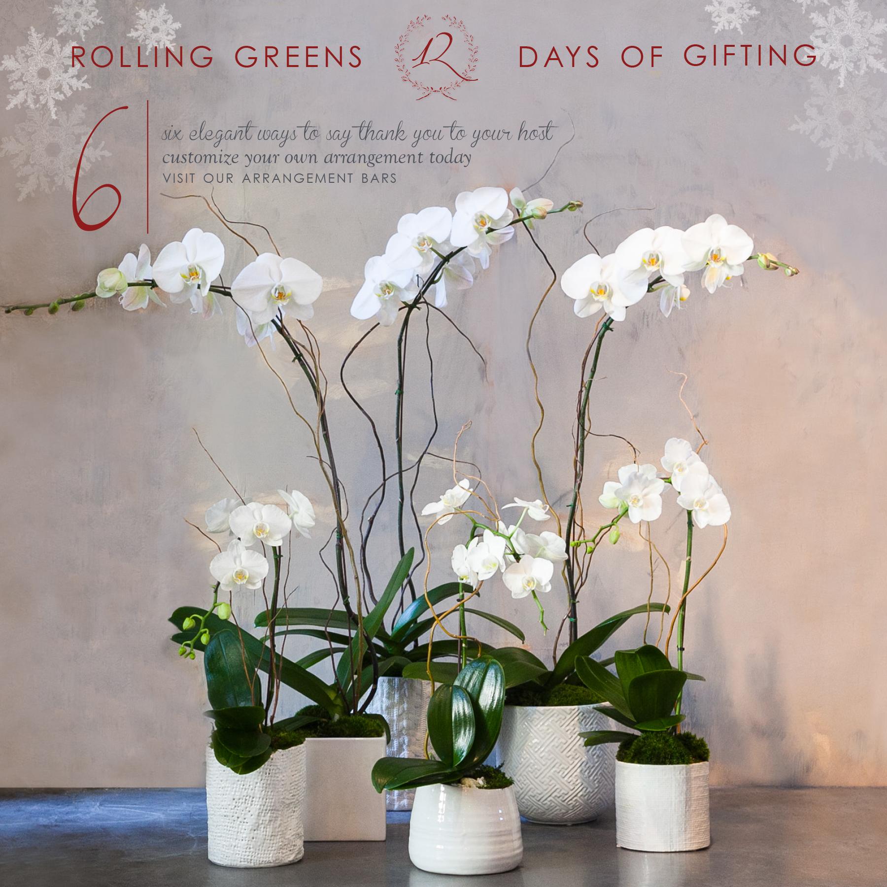 12_06_14_orchids