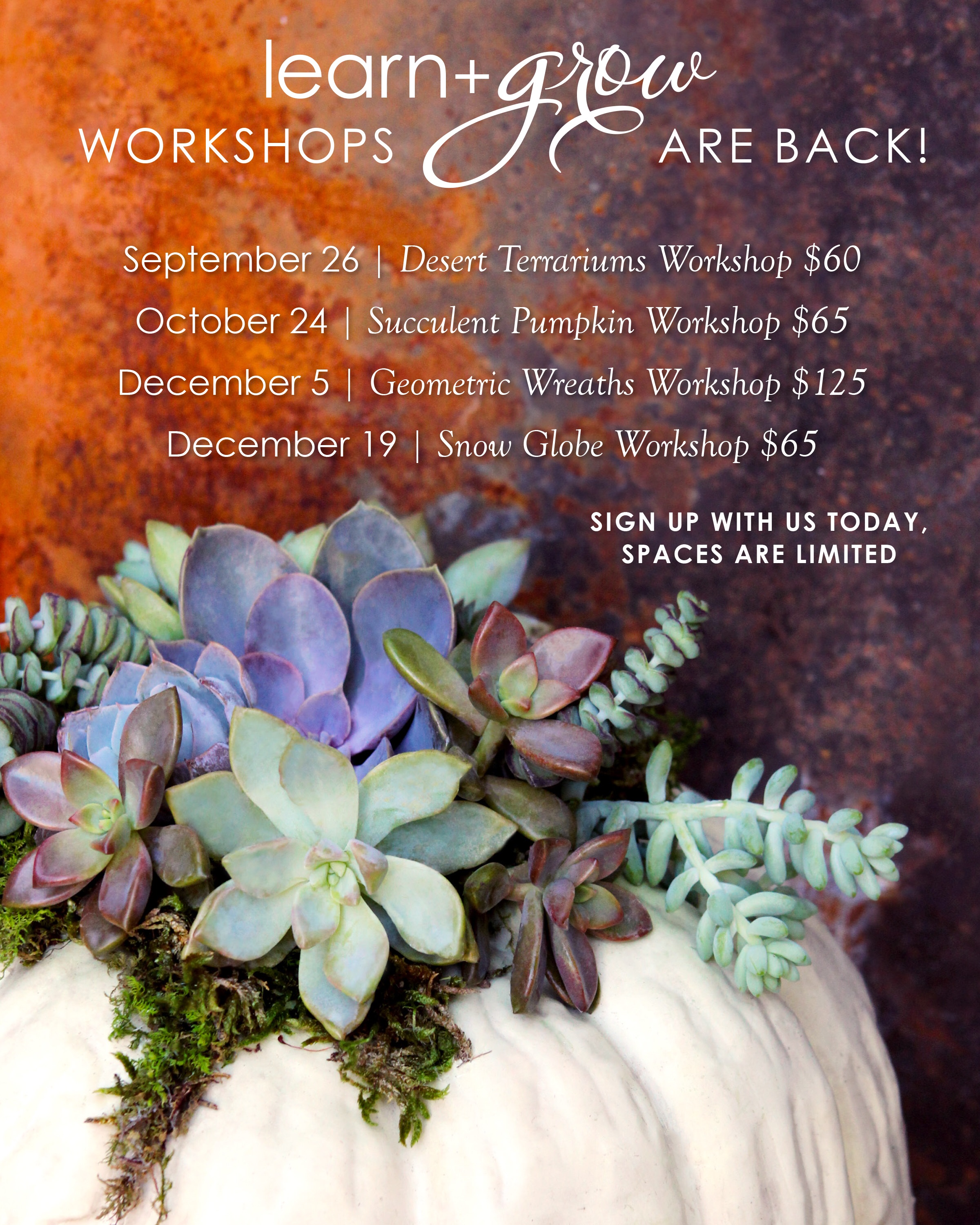 Our Learn + Grow Workshops have returned! | Our Aesthetic blog