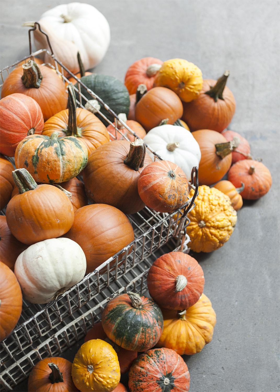 pumpkins_2