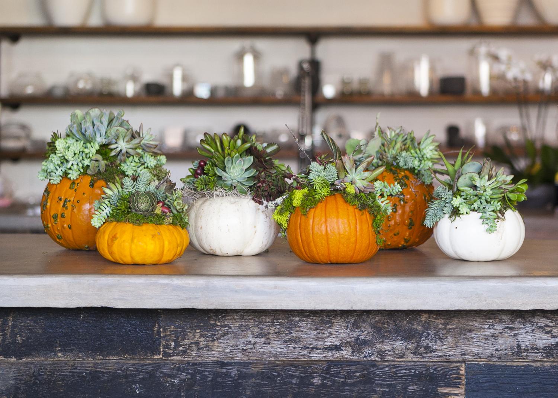 succulent_pumpkins