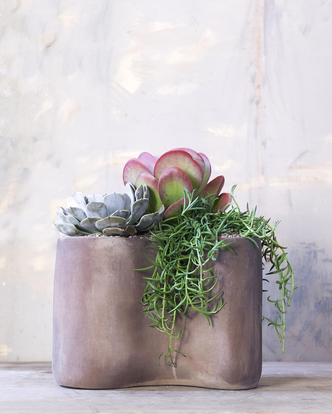 succulent_arrangement_large4