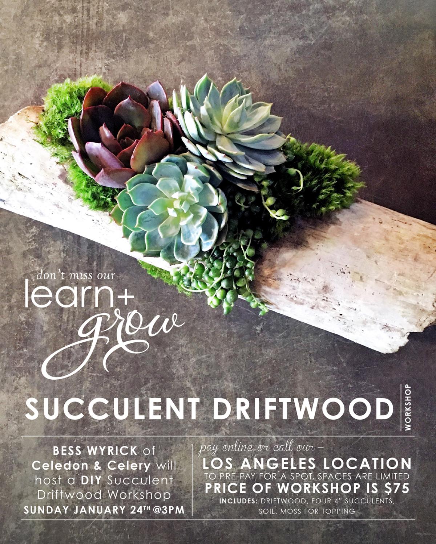 learn_grow_driftwood_bwyrick_Insta