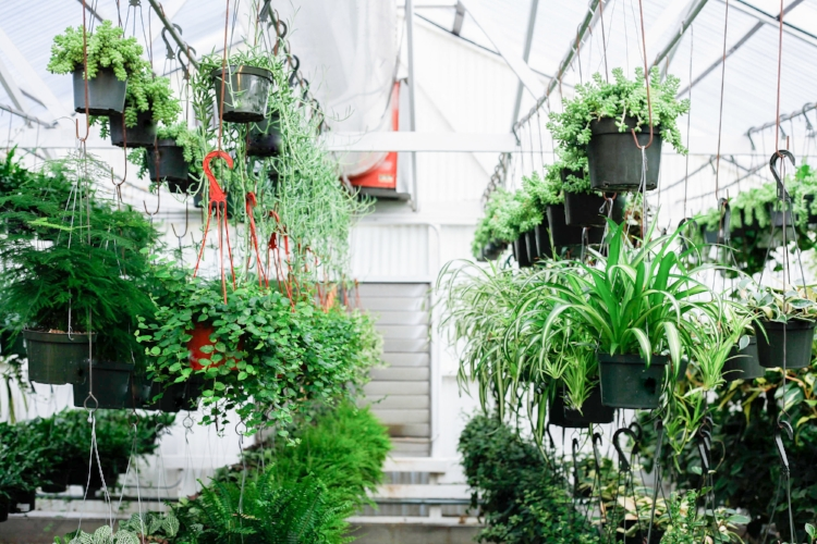 ... Ceiling Than Your Floor, Which Allows You To Have More Plants In Your  House! You Can Hang Multiple Bundles Of Planters From Your Ceiling Space,  ...