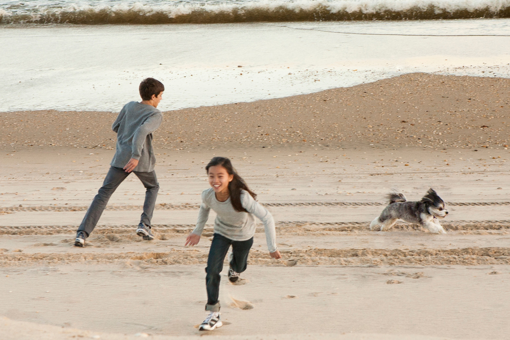 Brother and Sister Run around the Beach With Puppy