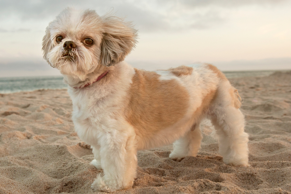 Best Hamptons Pet Photographer