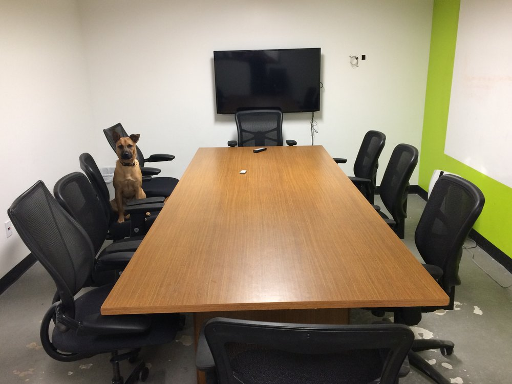 We are DOG FRIENDLY! (Fife, VP of Barketing, shown in our Executive Conference room)