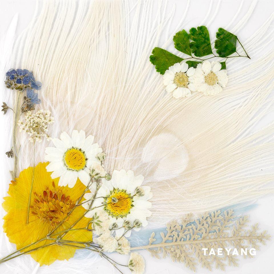 taeyang.jpg