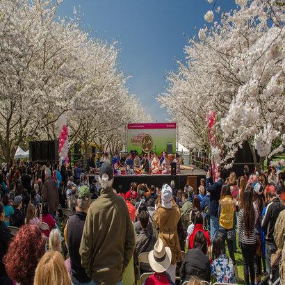 rsz_cherry-blossom-festival-new-1280uw.jpg