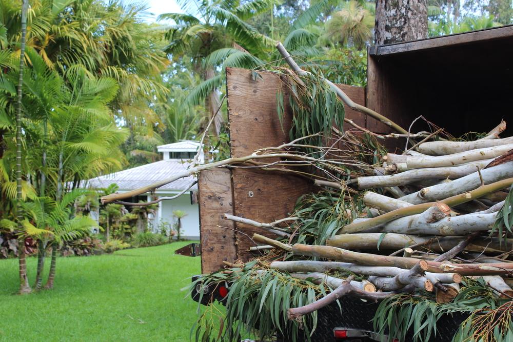 eucalyptus REMOVAL - HAMAKUA COAST