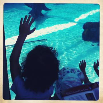 My niece & nephew at the Aquarium. Trying to stay as curious as them ! I miss them so. Family is key.