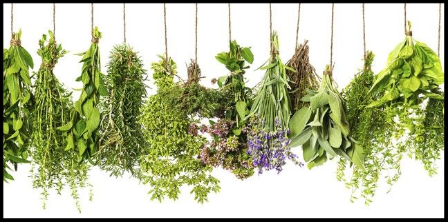 5-healing-herbs-you-need-to-eat-more-of-136403301409603901-160111131911.jpg