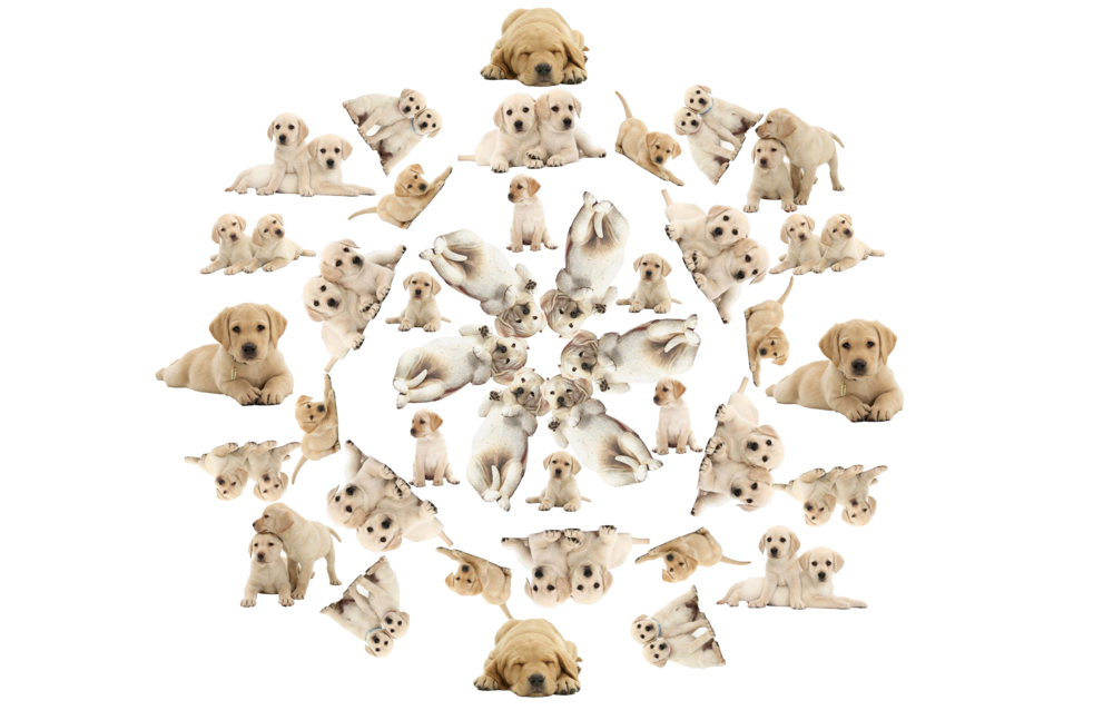 pup luv .png