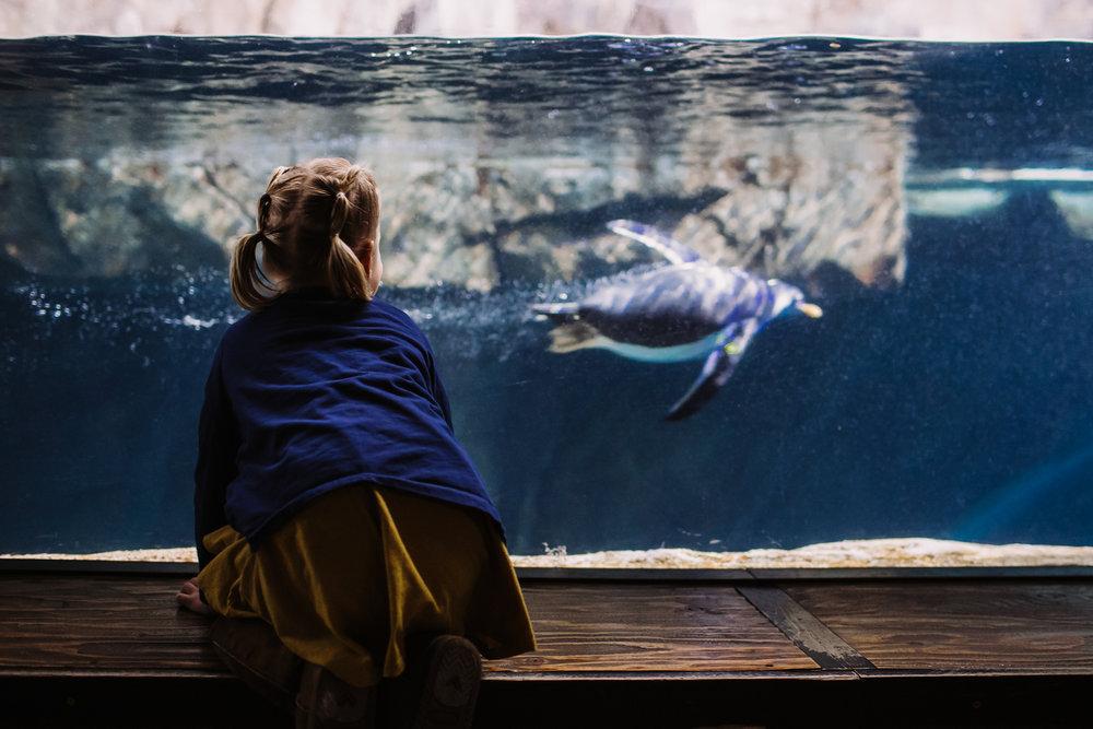 AquariumFB.jpg