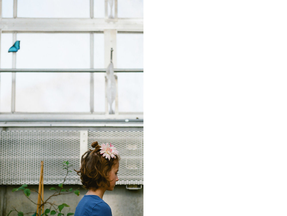 Juju Butterfly.jpg