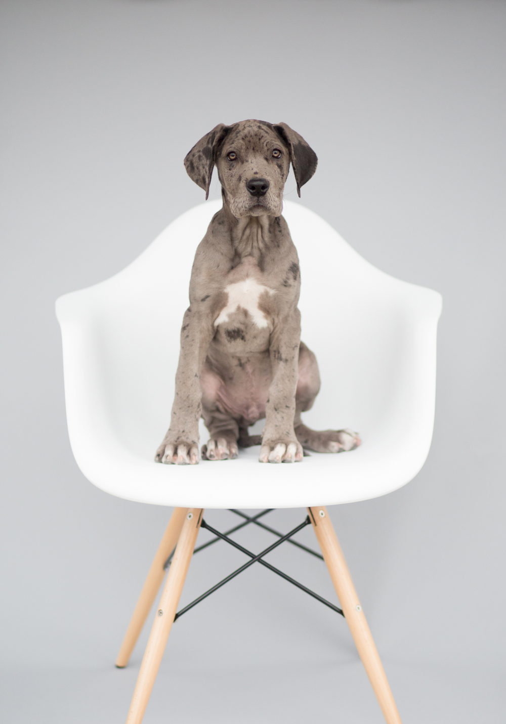 Dallas Dog Photographer (11 of 41).jpg