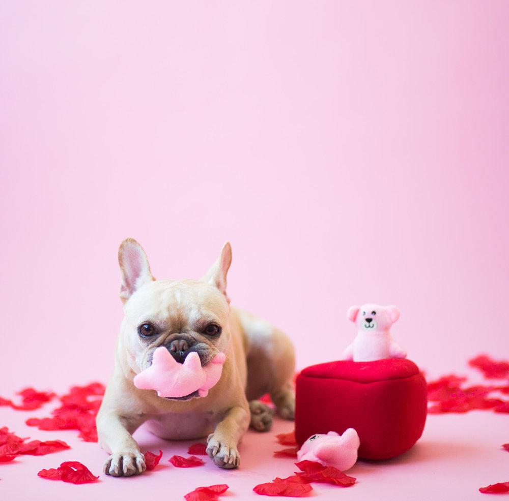 Zippy_Valentine-15.jpg