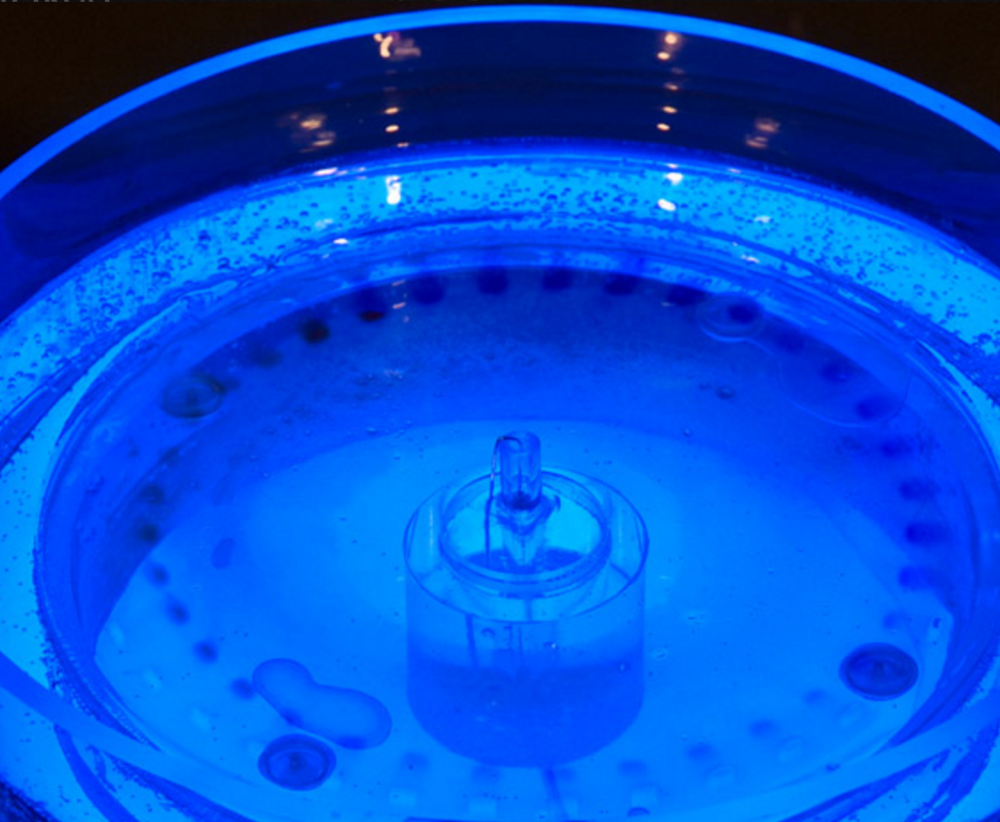A closeup of Vanouse's circular electrophoresis, image courtesy of  the International Digital Art Exhibition