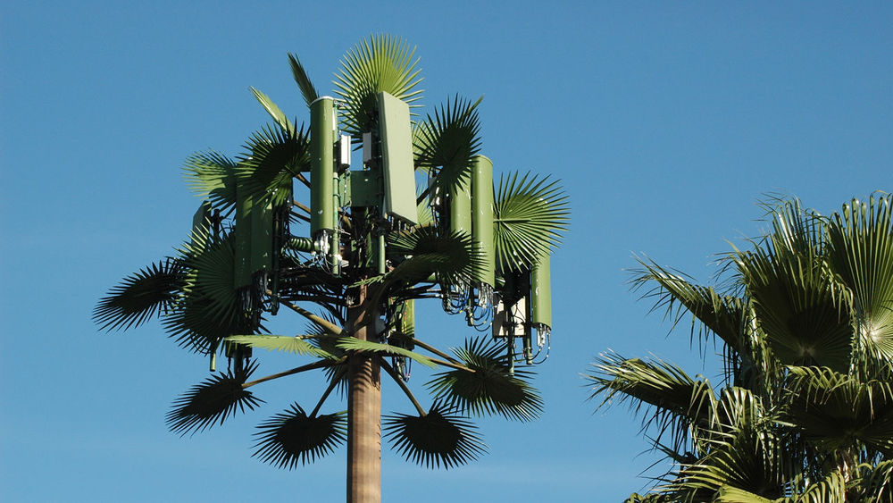 Image: Cell Tower Tree via Shutterstock