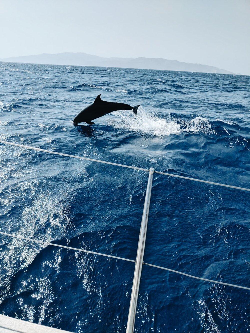 Dolphin spotting near Paros, Greece
