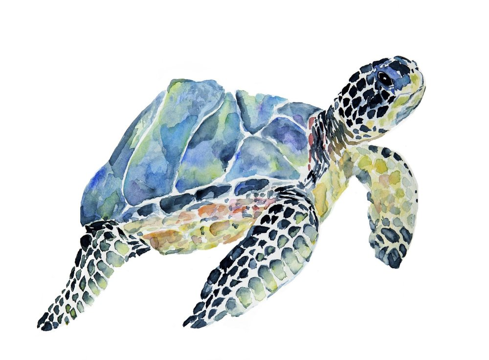 """Marbled Loggerhead Turtle"" 12x16 Original is Available"