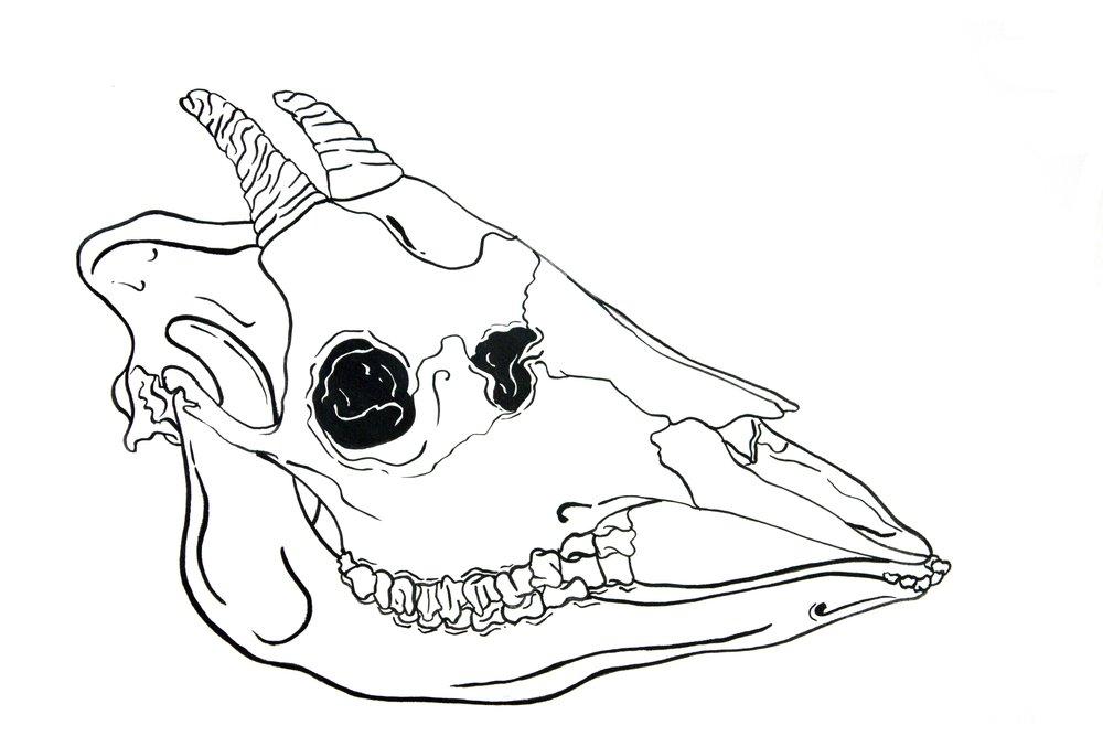 skull-7.jpg