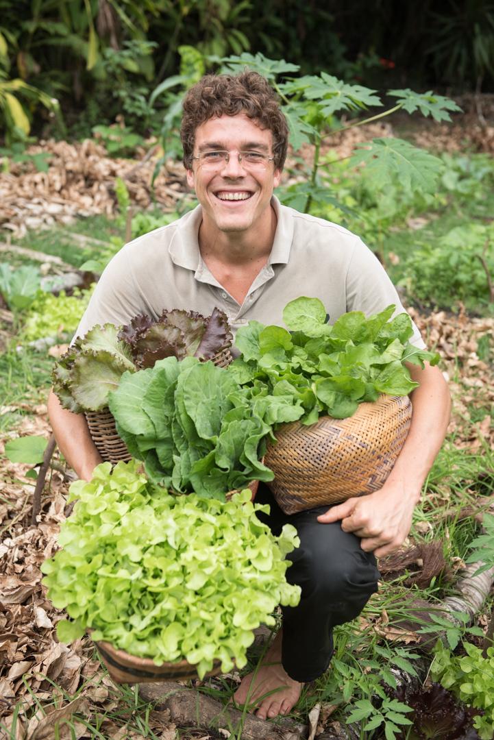 Colheita de hortaliças