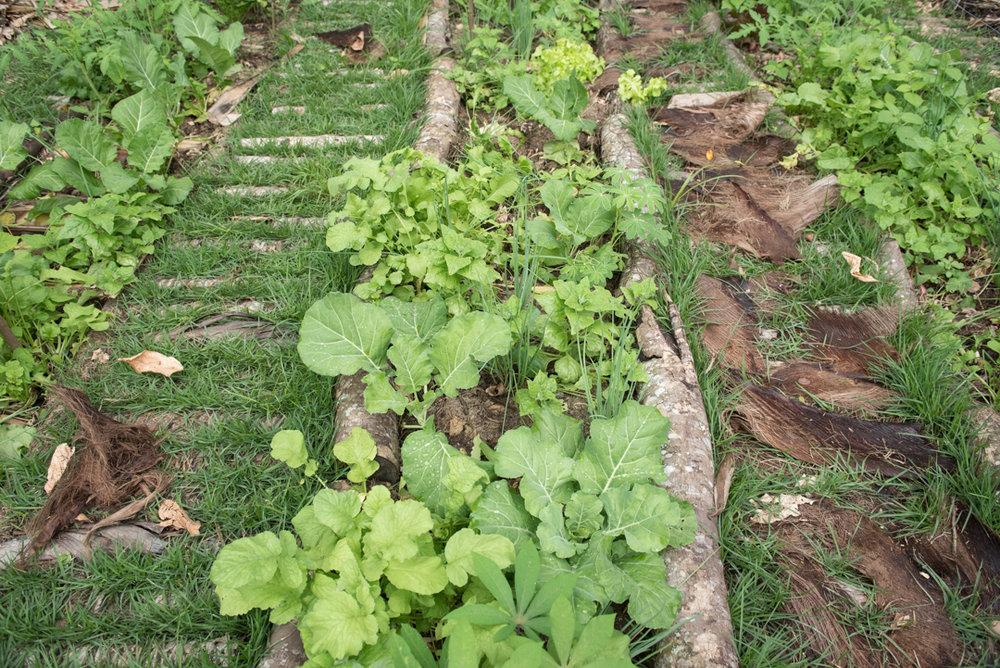 Horta em um quintal em Niterói