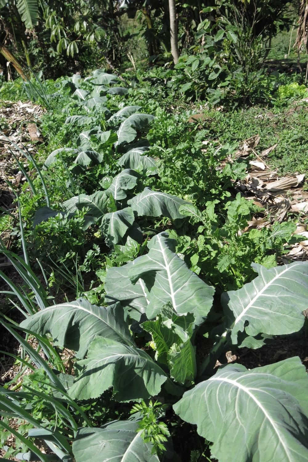 Leira de hortaliças da Fazenda Grupo do Jardim
