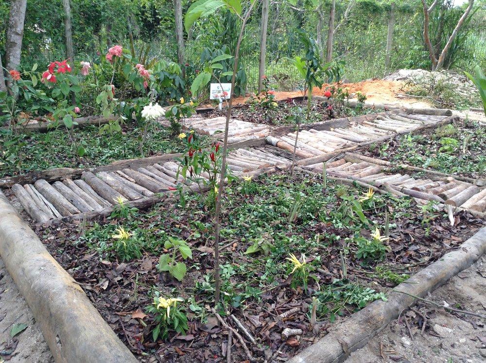 Horta criada em uma Escola Municipal em Cabrália/Bahia