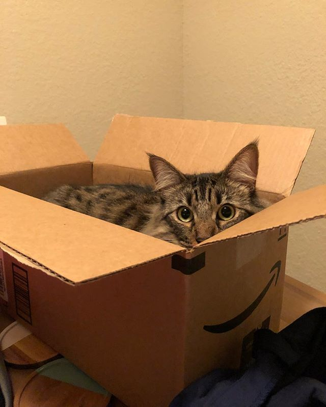 Boo! #catinabox #amazoncat #isthisforme #bigeyes #cats_of_instagram #mainecoonstagram #mainecoon