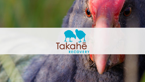 Takahe Recovery