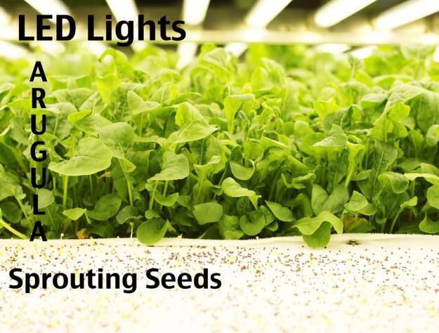 aeroponic farming system