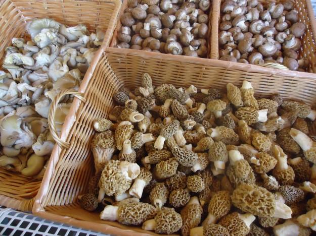Morels, mushrooms, fried morels, spring vegetables, healthy