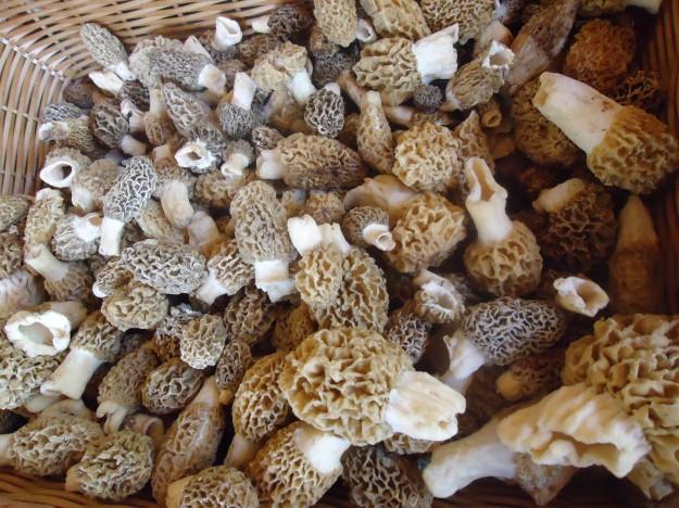morels, mushrooms, spring, chanterelles, farmers market