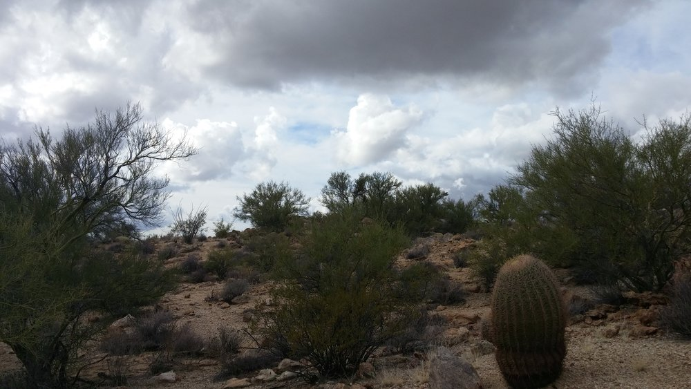 Walking around the Joshua Tree National Forest