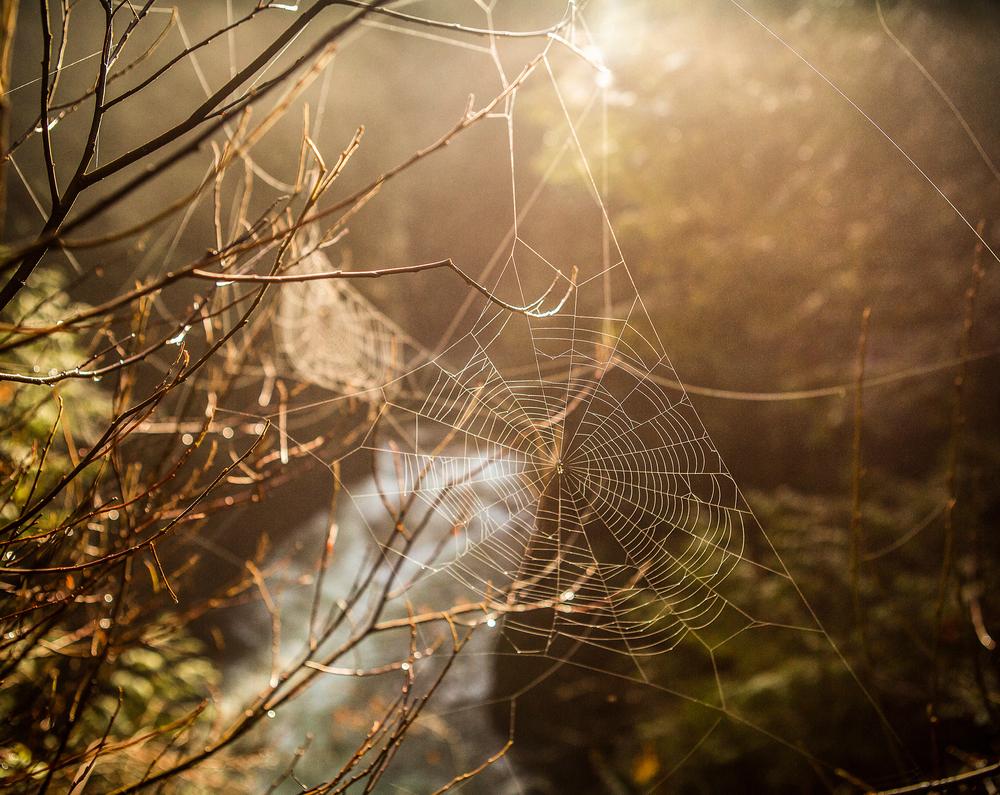 Cobwebs.png
