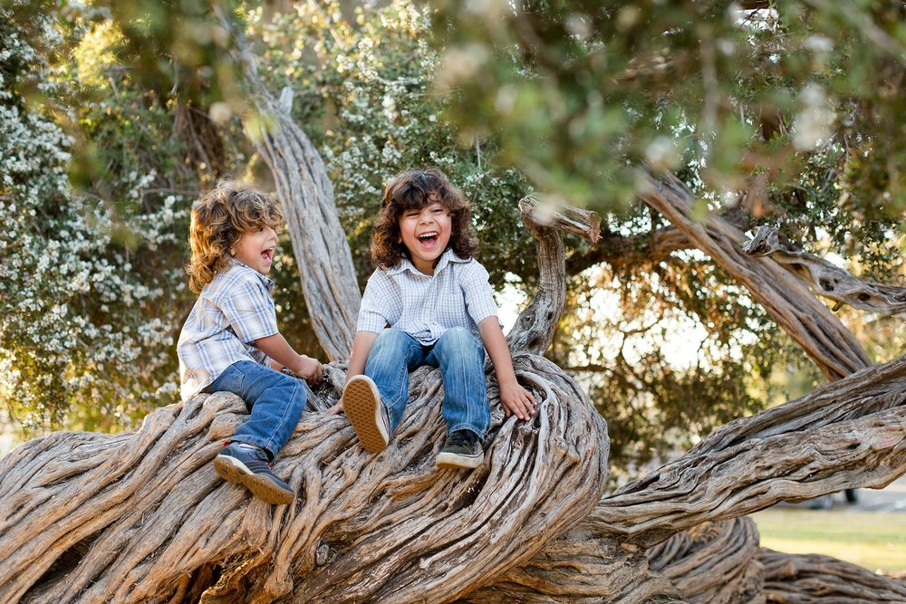 San Diego Family Photographer Brothers in a tree Christine Dammann Photography