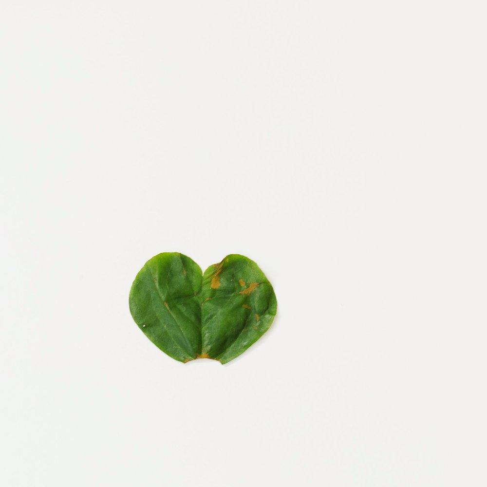 San Diego Family Photographer Christine Dammann Photography Heart