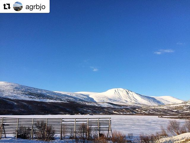 Dagens blinkskudd. 😊 #Repost @agrbjo ・・・ #norway2day #norway_photolovers #dovrefjell #eastnorway2day #norwaypng #mittnorge #earlimorning #dreamchasersnorway #norway #ilovenorway #igscandinavia #pocket_norway #pocket_nature #bns_nature #bns_nature #bns_norway #splendid_mountains #everything_imaginable #fiftyshades_of_nature #ig_sharepoint #ig_myshot #ig_daily #ig_photooftheday #mobilephotography #top_nature_photo #igmw_skies