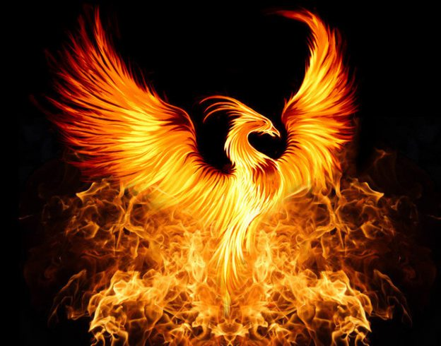 the phoenix is arising from the flames daisy foss angels of